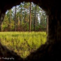 Red-headed_woodpecker_cavity_inside_out