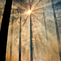 Sunburst through smoky Longleaf-Edit